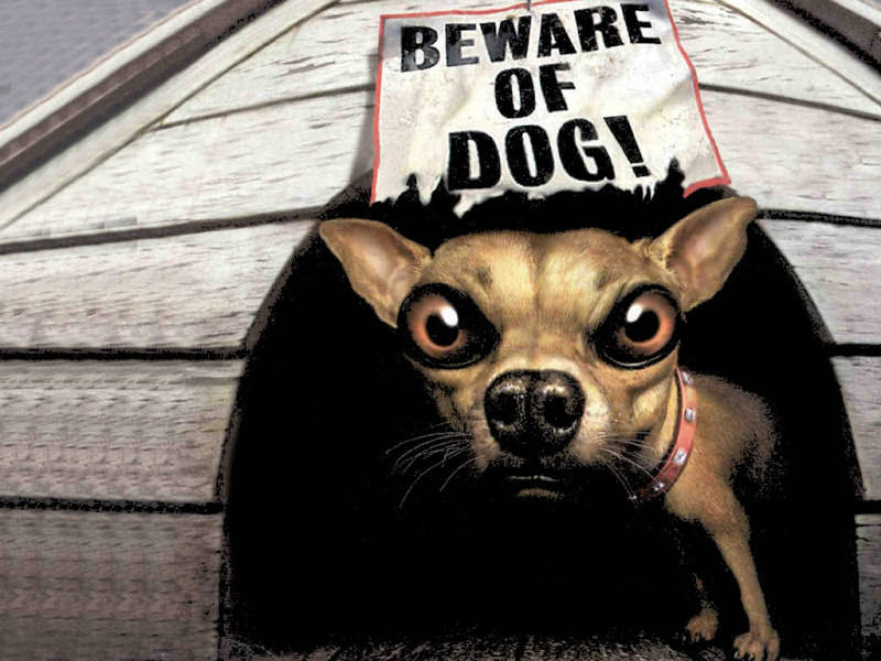 funny dog wallpaper. funny dog sign