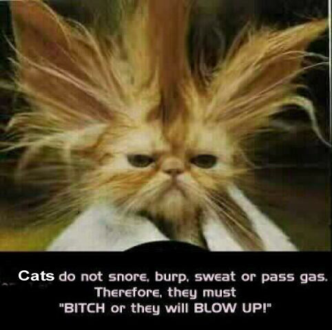 http://rulingcatsanddogs.com/contents/funny-pics/original/silly-cats-saying-about-blowing-up-kitty-comedy-pic.jpg