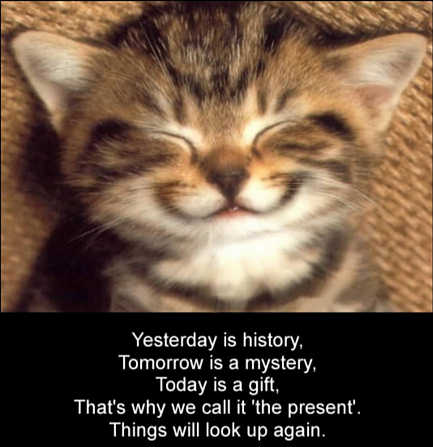 A funny pet picture of a cute kitten smiling with an inspirational cat