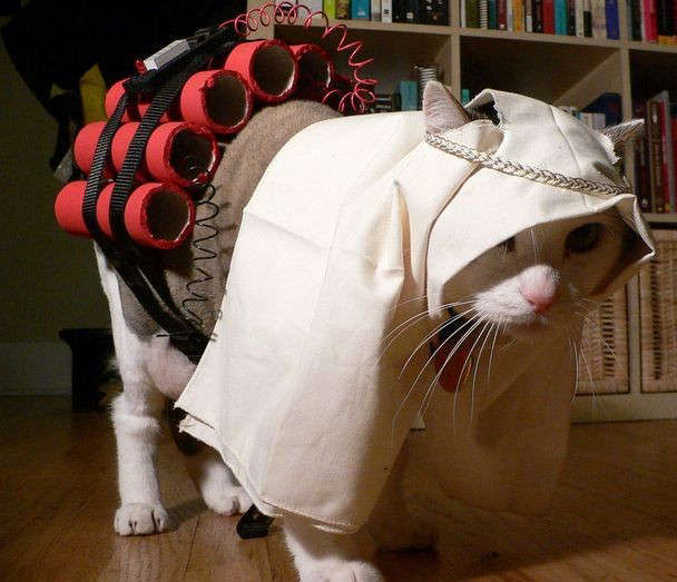 A f unny cat Halloween costume pet picture. A humorous photo of a feline